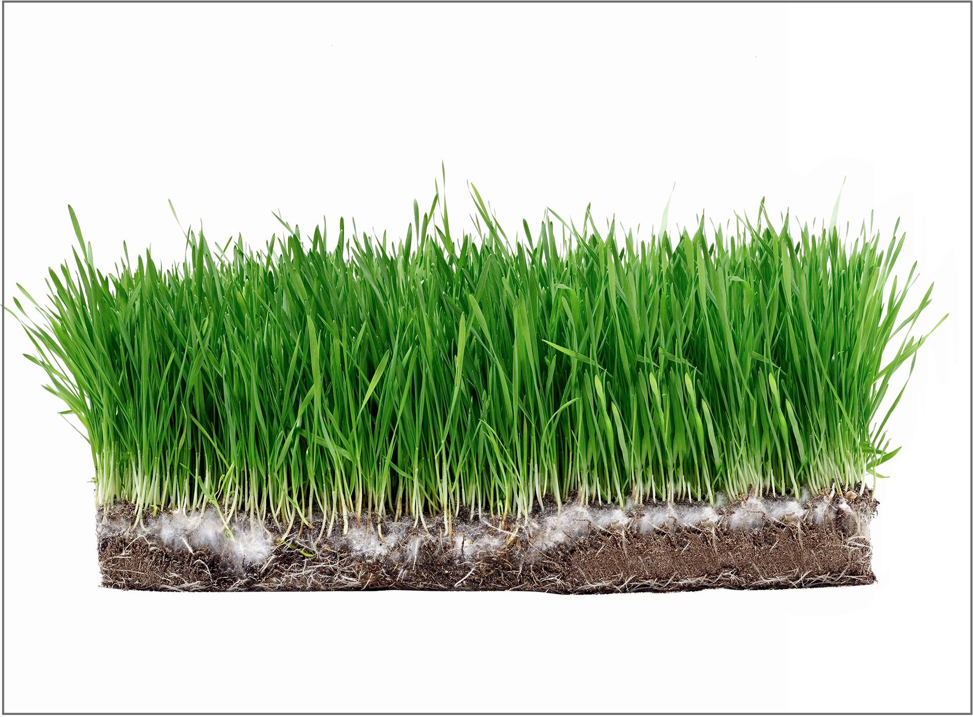 block-of-grass