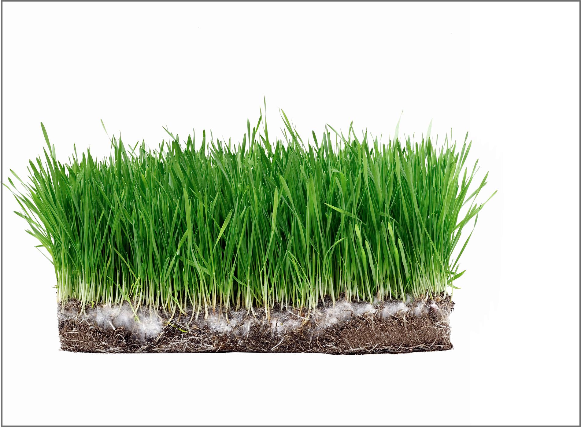 origional-block-of-grass